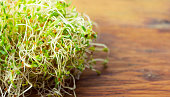 Fresh Alfalfa Sprouts On Wood Background