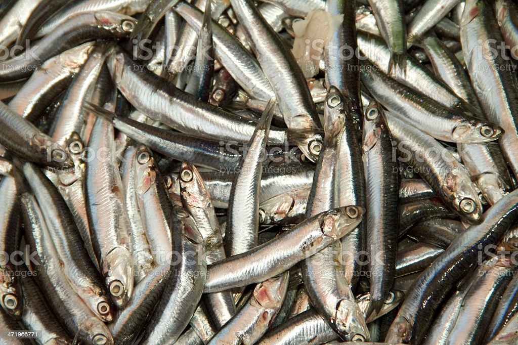 fresh anchovies at the fish market stock photo