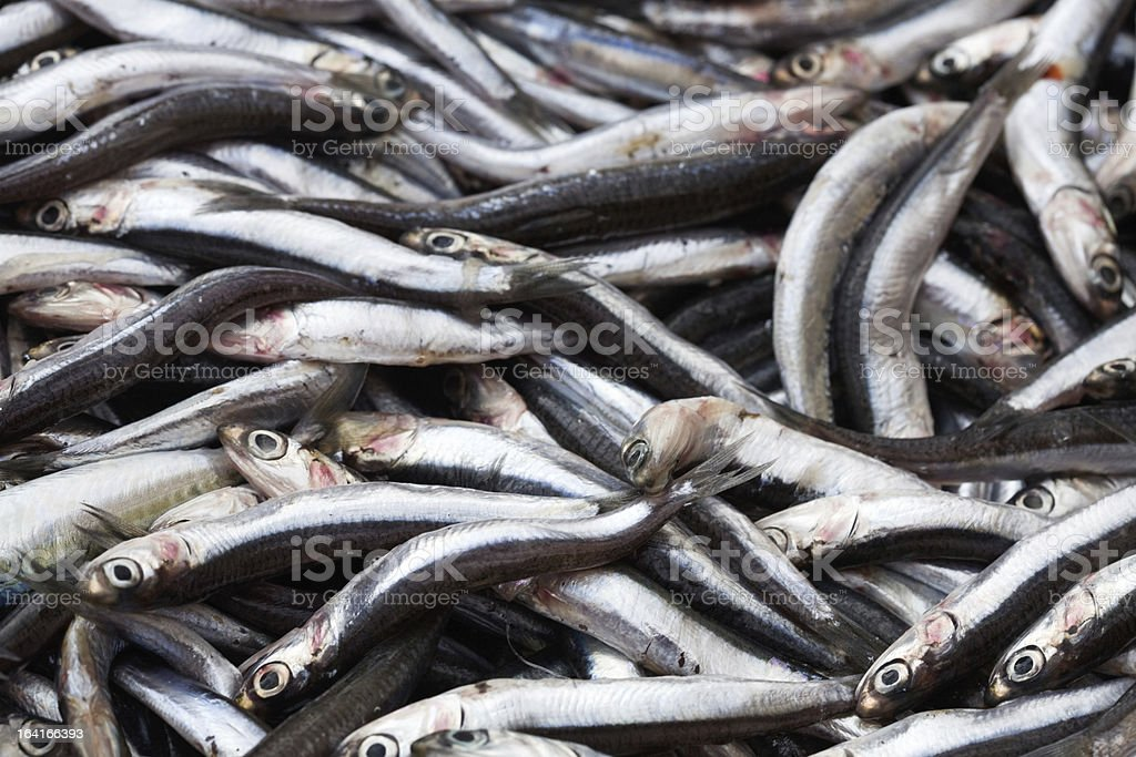 Fresh Anchovies royalty-free stock photo