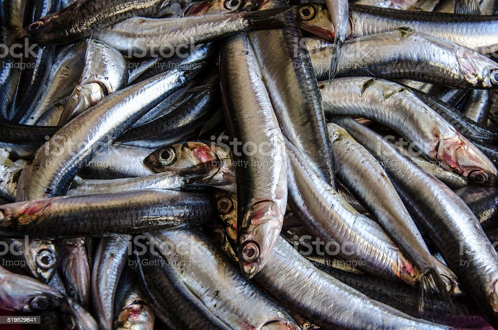 fresh anchovy fish stock photo