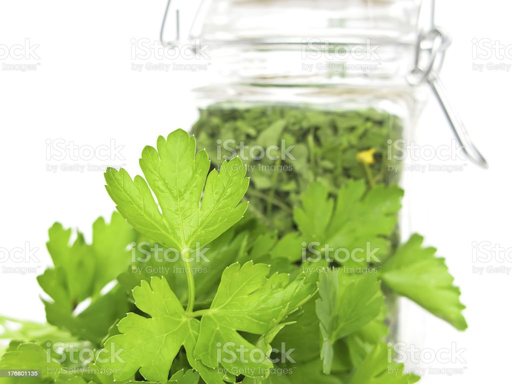 Fresh and Dried Cilantro royalty-free stock photo