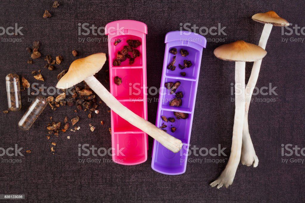 Fresh and dried magic mushrooms. stock photo