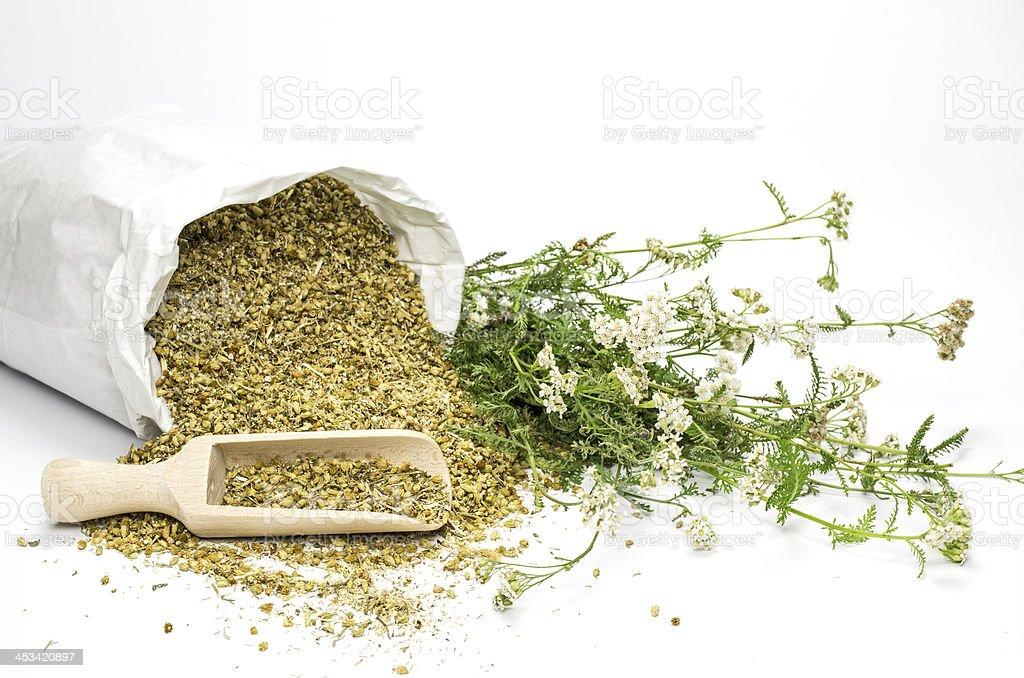 Fresh and dried yarrow stock photo