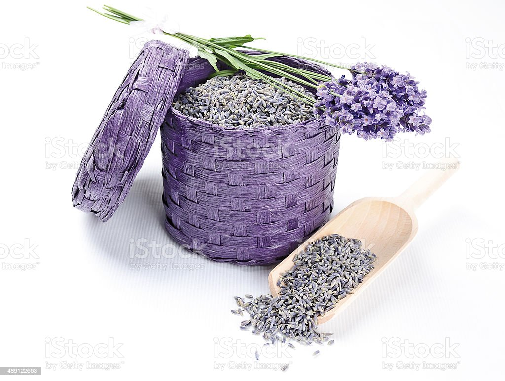 Fresh And Dry Lavender Flowers stock photo