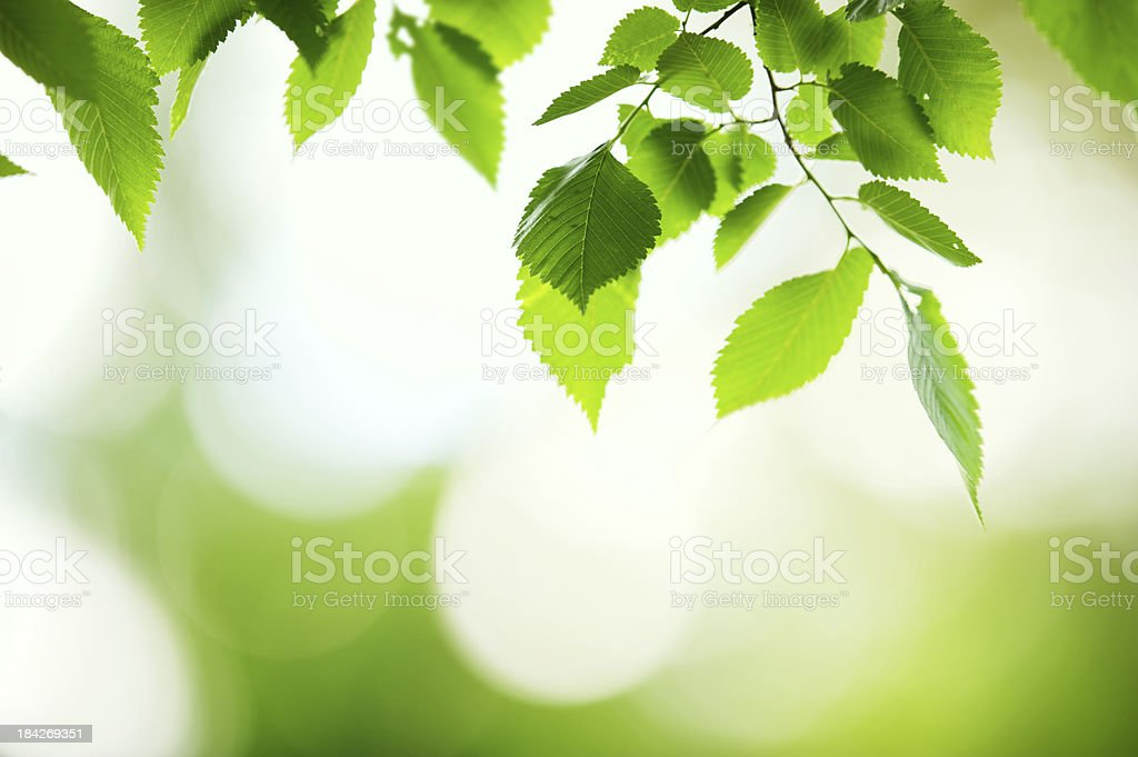 Fresh and green leaves royalty-free stock photo