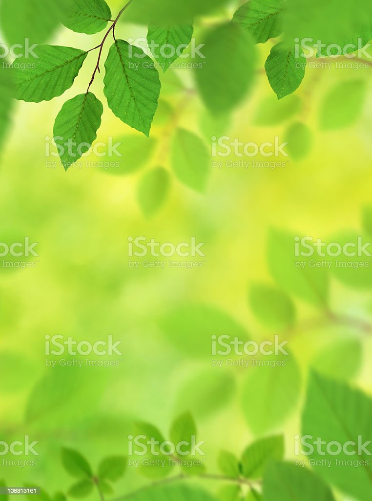 Fresh And Green Leaves XXXL royalty-free stock photo