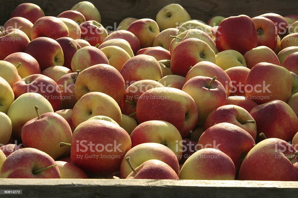 fresh and healthy stock photo