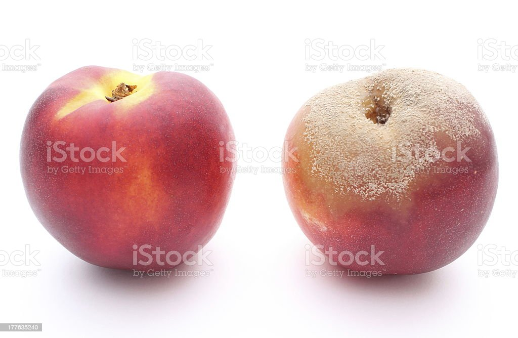 Fresh and moldy peach on white background royalty-free stock photo