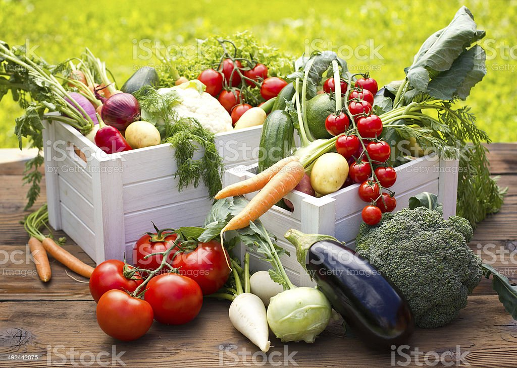 Fresh and organic vegetables in the garden stock photo