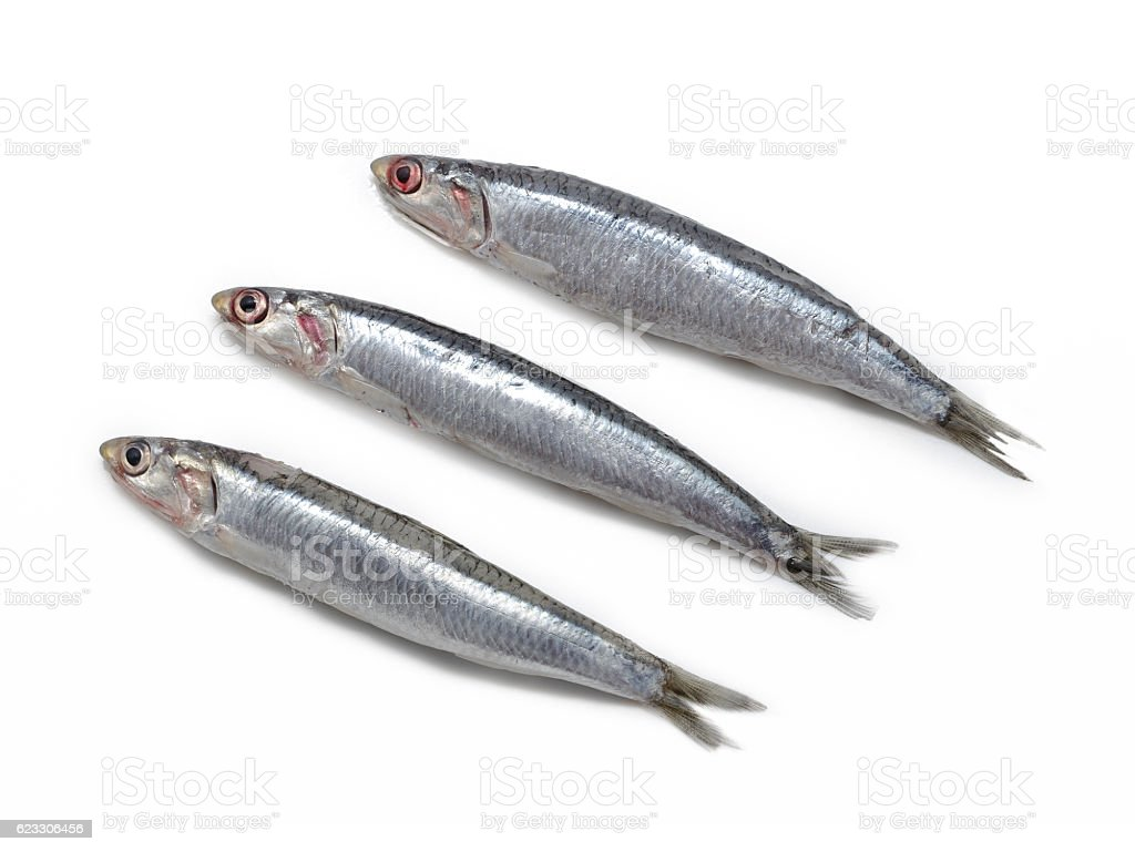 Fresh and raw mediterranean anchovies on white background stock photo
