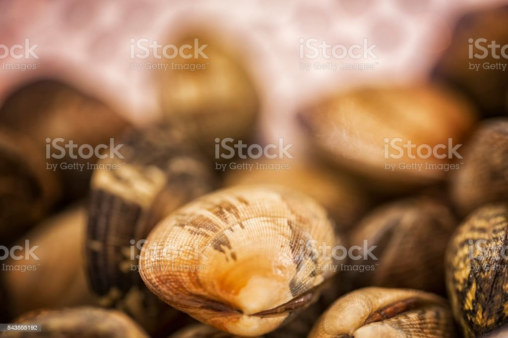 Fresh and Raw Mussels Vongole stock photo
