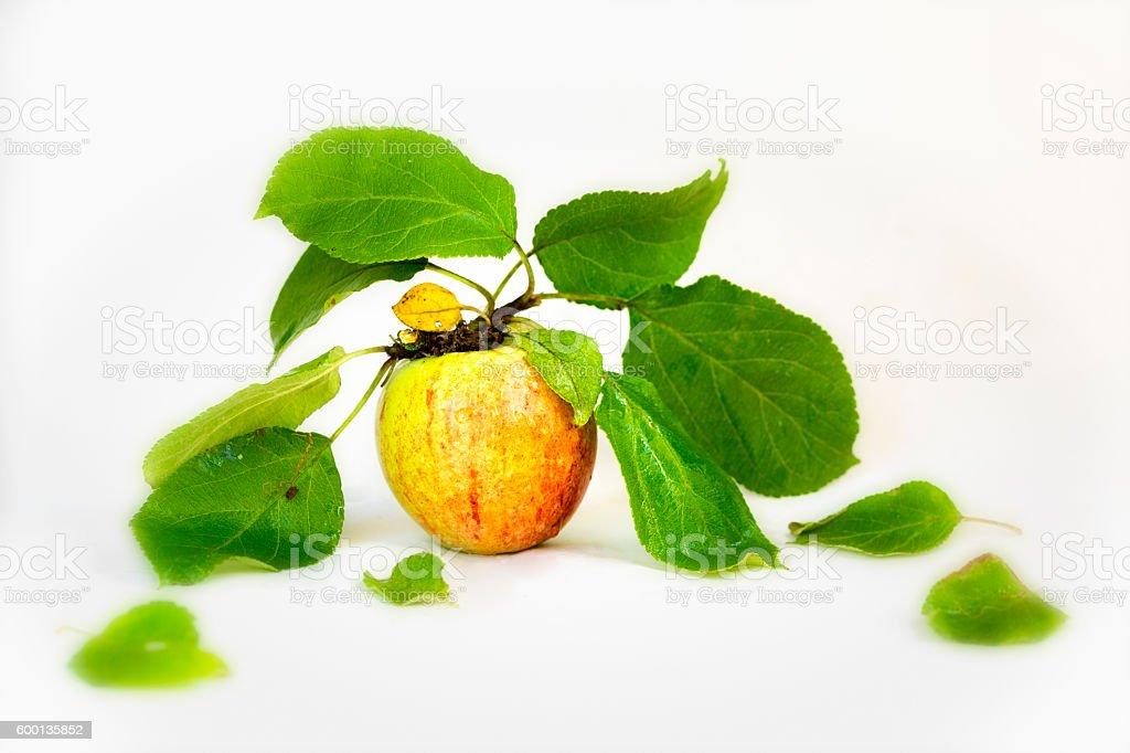 Fresh apple isolated on white stock photo