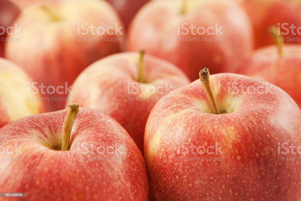Fresh apples stock photo