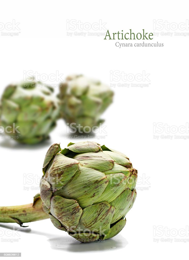 fresh artichokes isolated on a white background, sample text, ve stock photo
