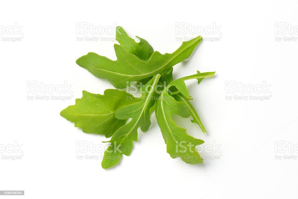 fresh arugula leaves stock photo