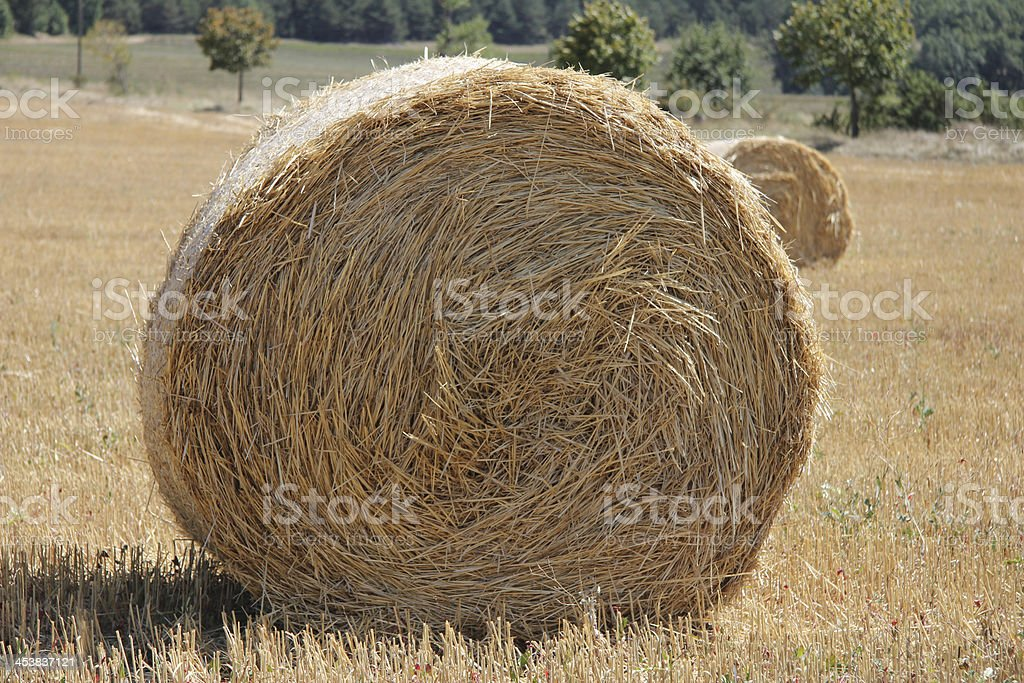 Fresh bales of hay royalty-free stock photo
