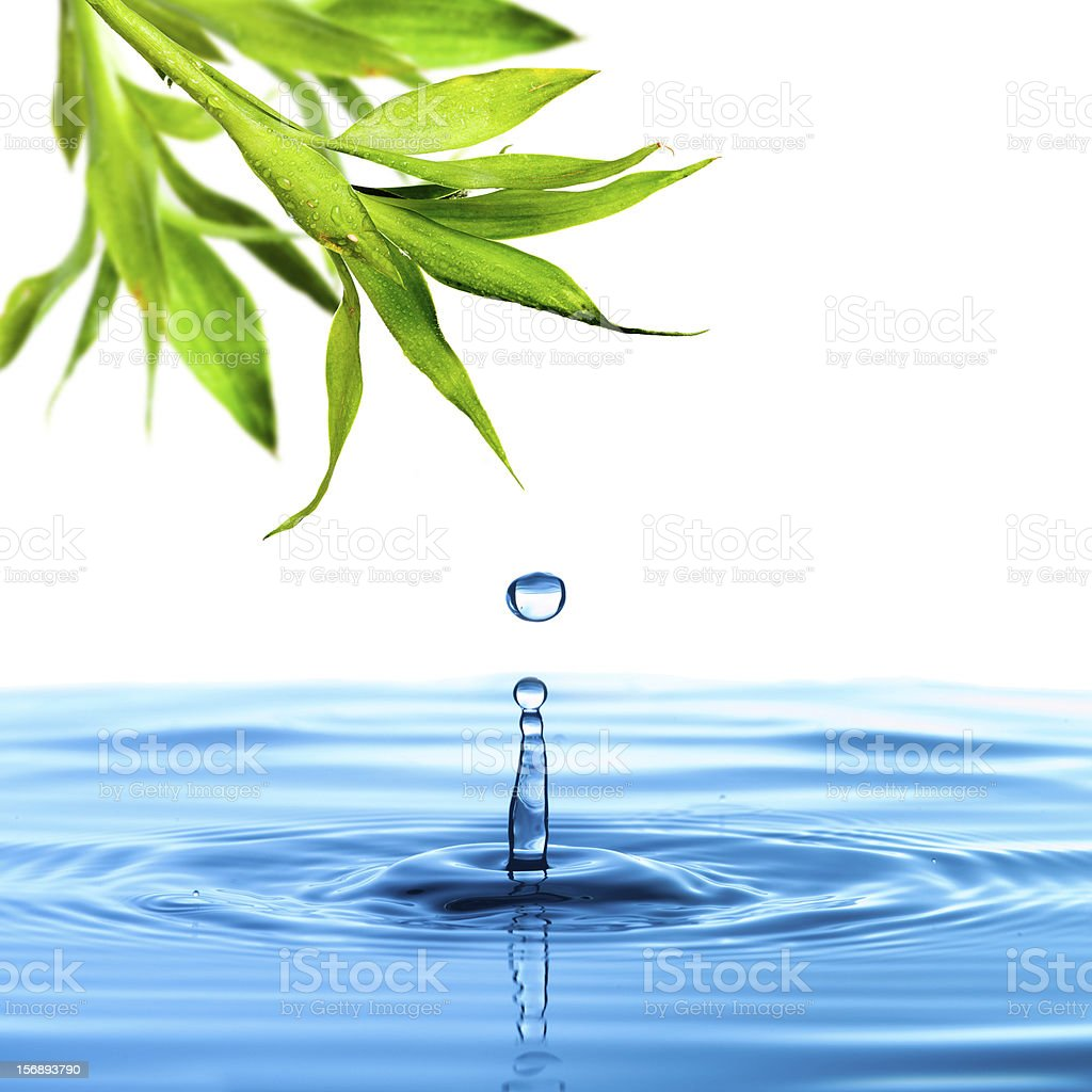 Fresh bamboo leaf with water drop royalty-free stock photo