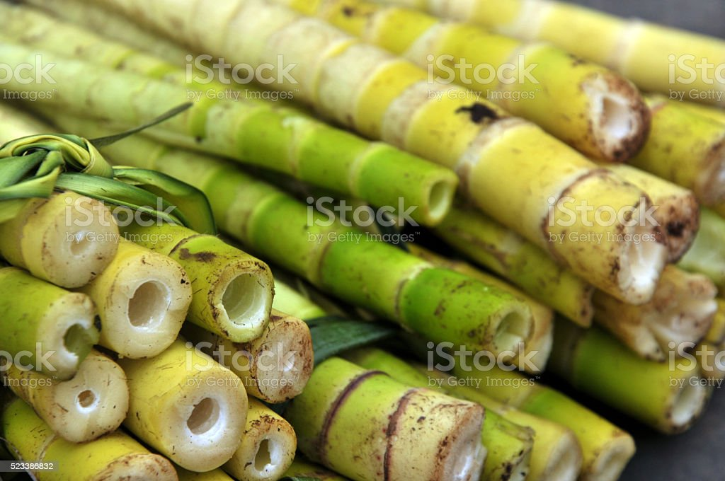 Fresh bamboo shoots stock photo