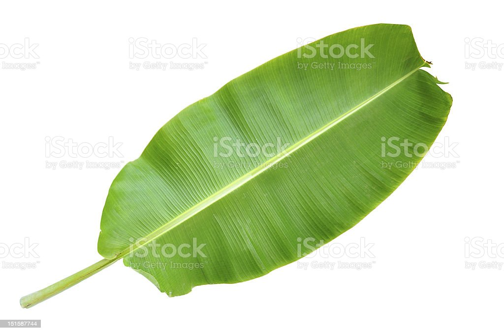Fresh Banana Leaf stock photo