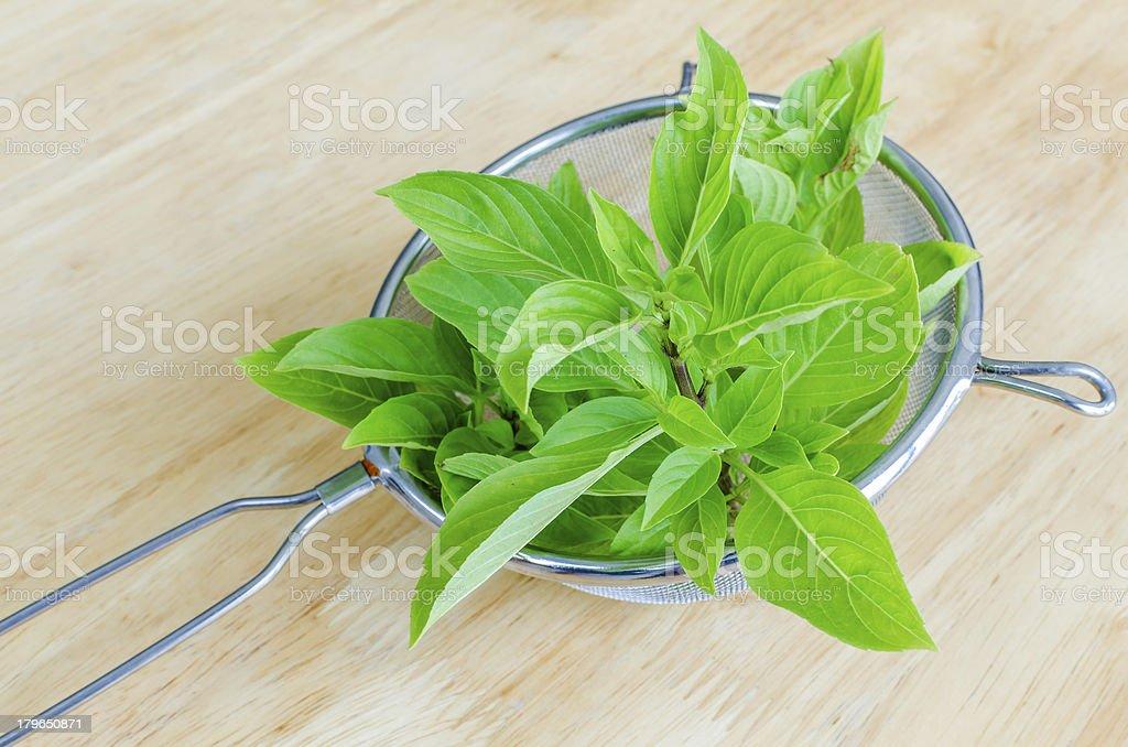 Fresh basil in sieve royalty-free stock photo