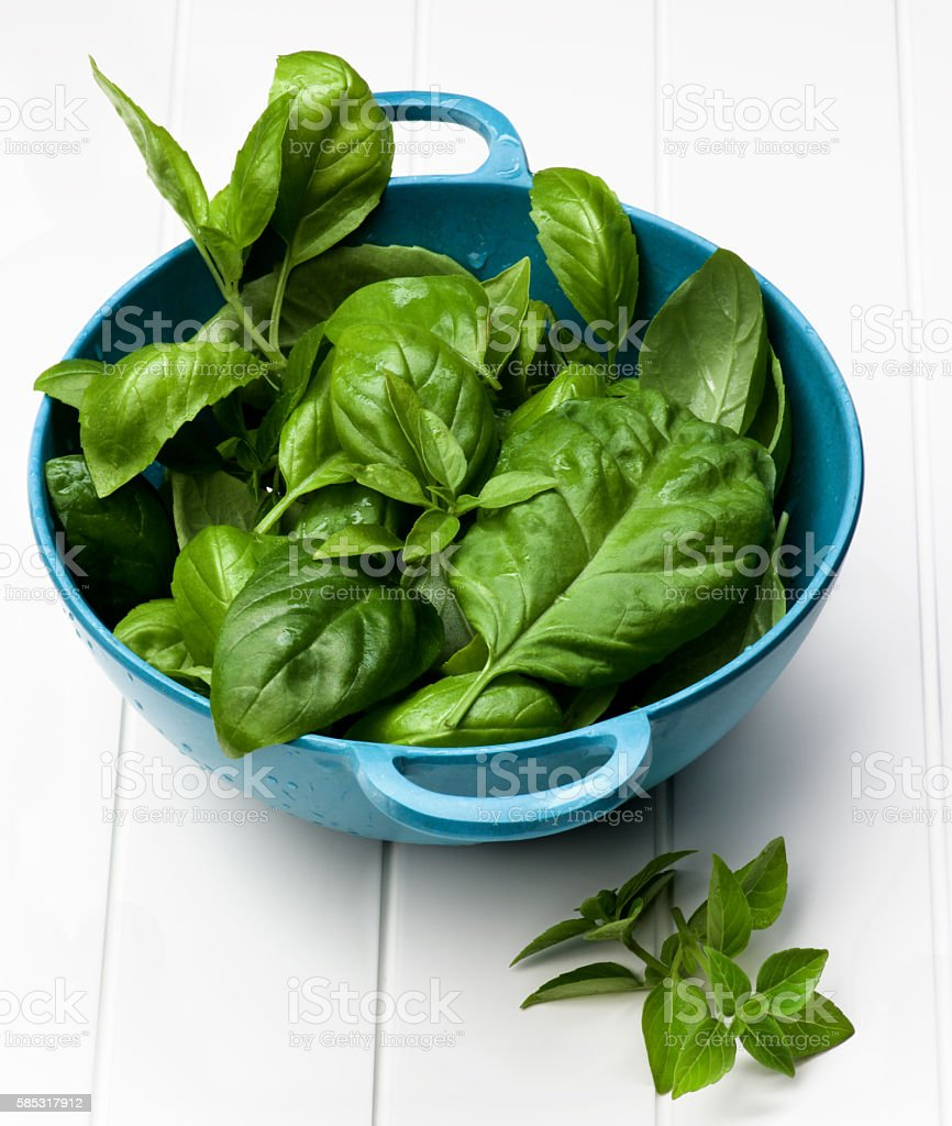 Fresh Basil Leafs stock photo