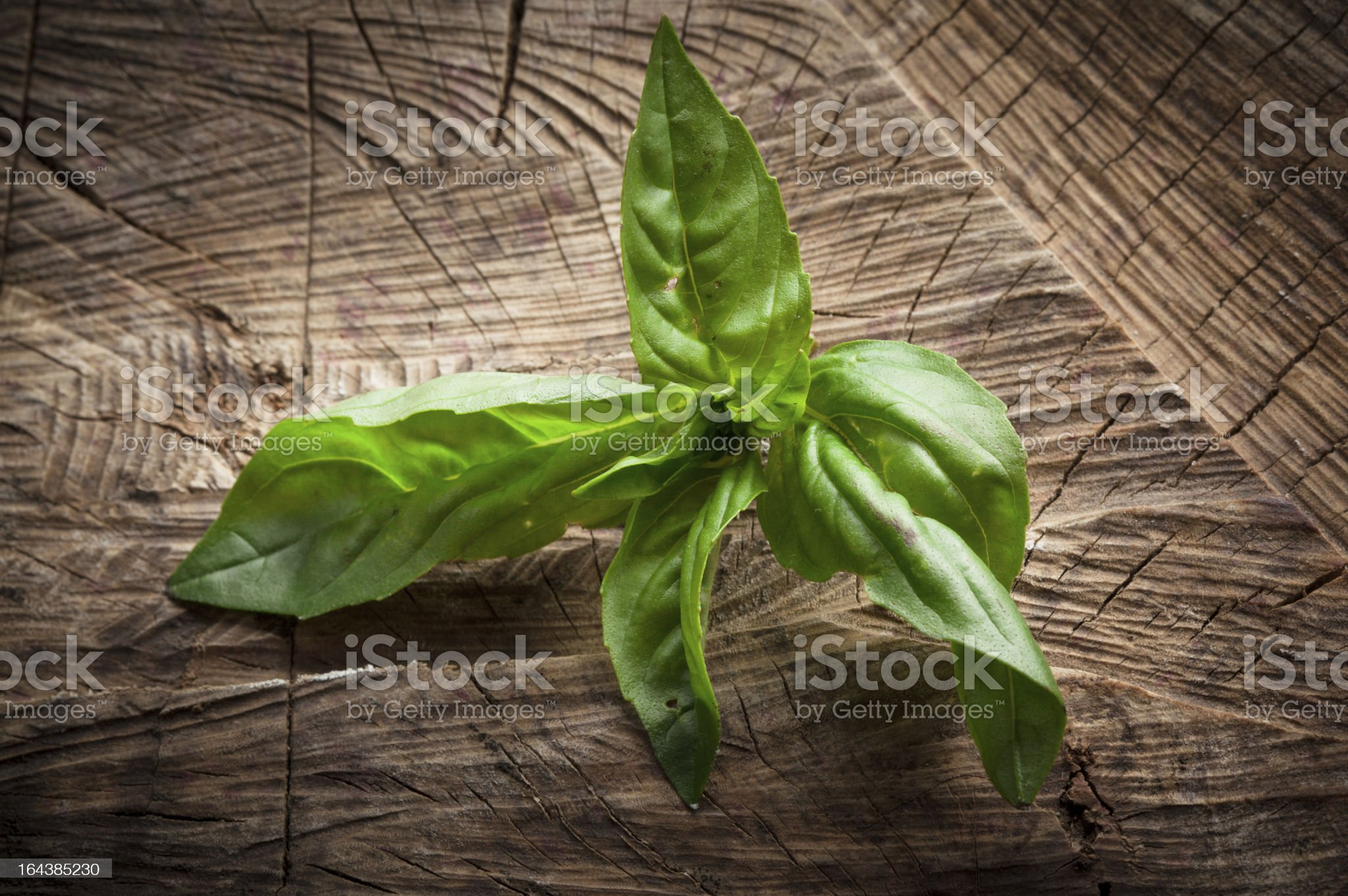Fresh basil on dark wooden background royalty-free stock photo