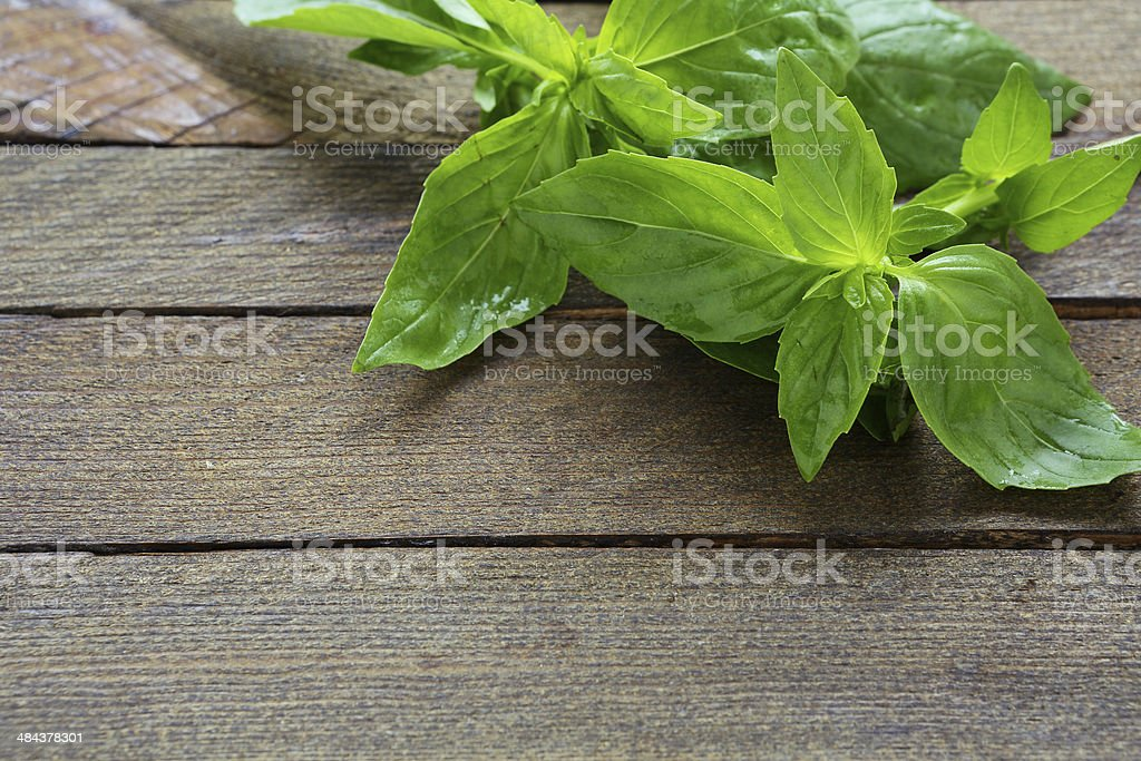 fresh basil on the boards stock photo