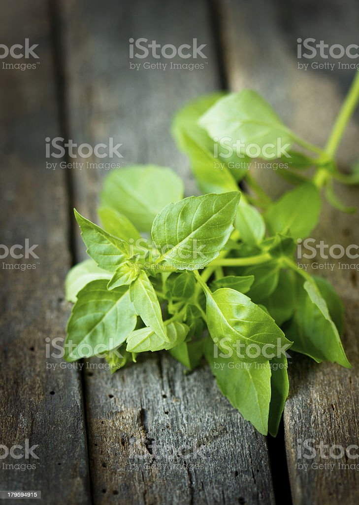 Fresh basil on the wooden table royalty-free stock photo