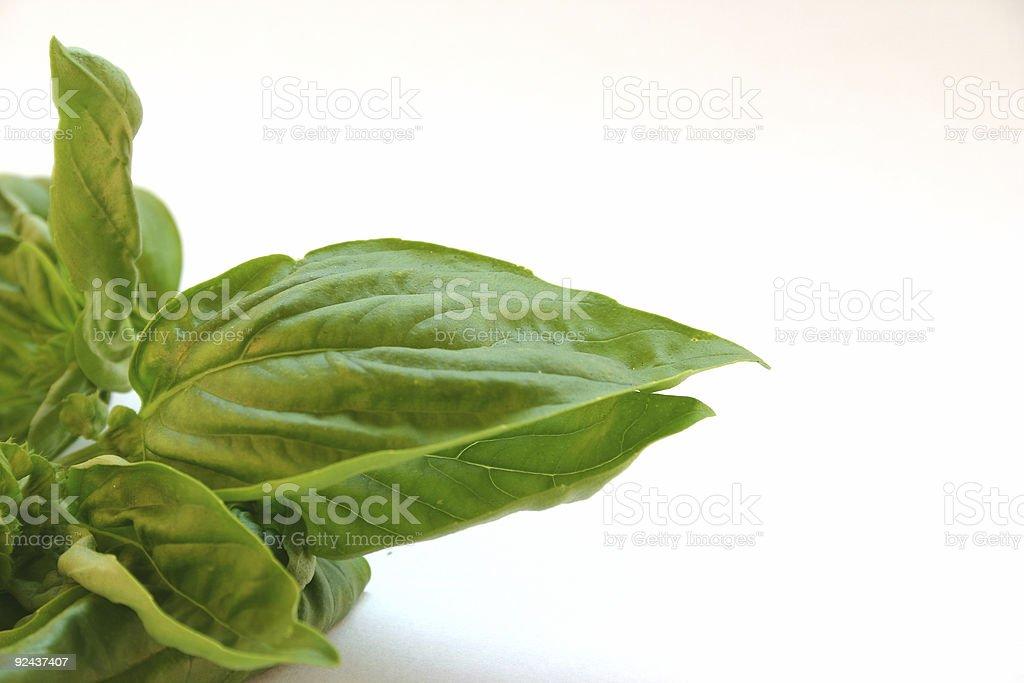 fresh basil stock photo