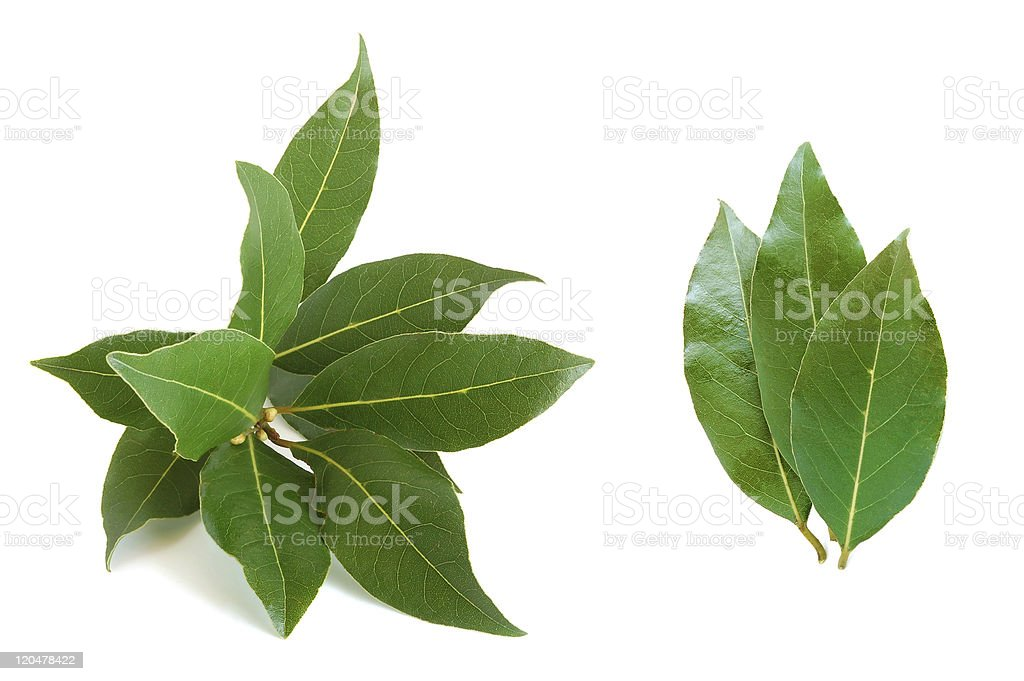 Fresh bay leaves on white background royalty-free stock photo