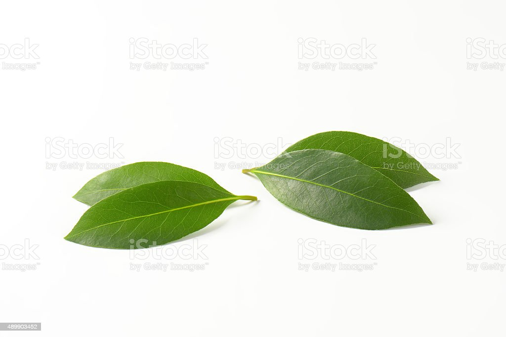 Fresh bay leaves stock photo