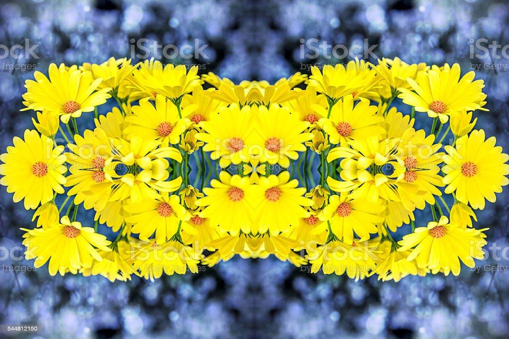 Fresh beautiful yellow Osteospermum flowers blossoming surreal shaped symmetrical kaleidoscope stock photo