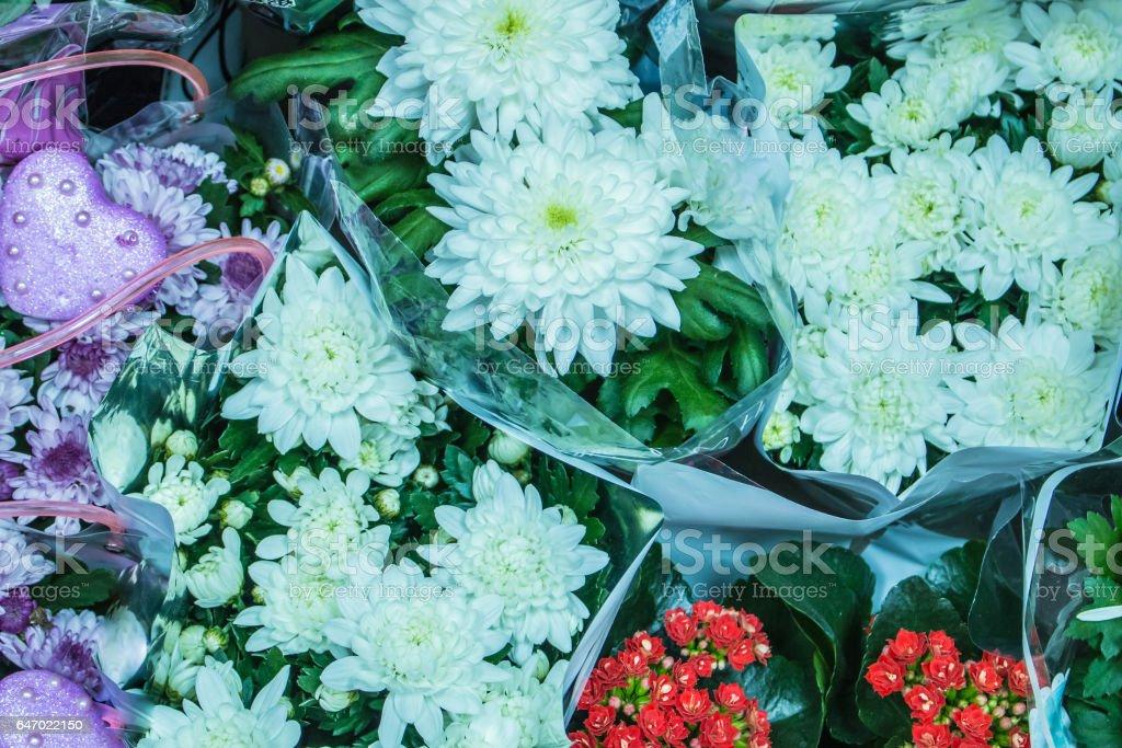 Fresh big white chrysanthemum closeup stock photo