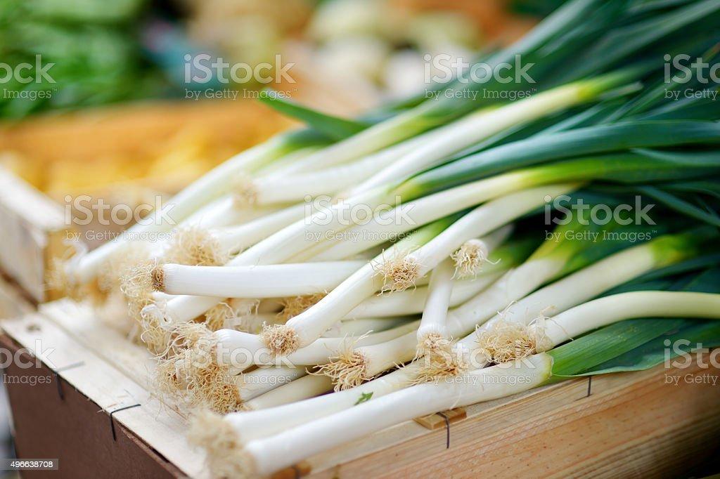 Fresh bio leek on farmer agricultural market stock photo
