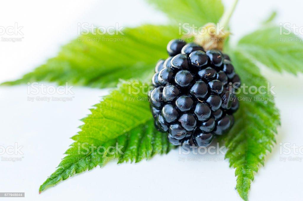 Fresh Black Berry stock photo