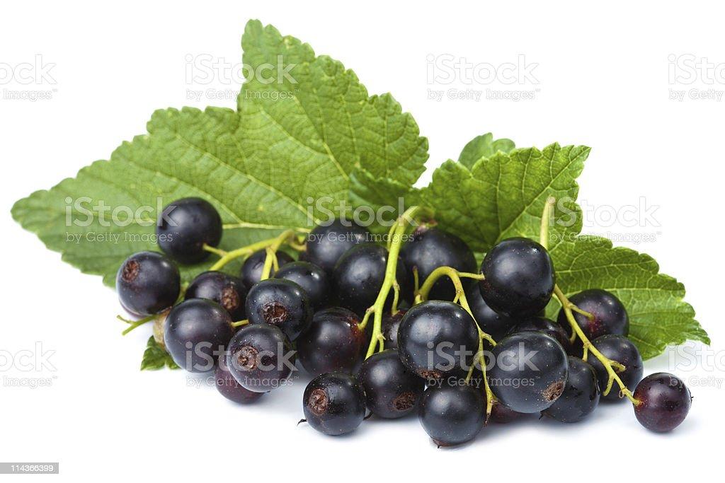 fresh black currant isolated stock photo