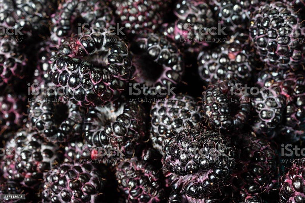 Fresh black raspberries in boxes stock photo