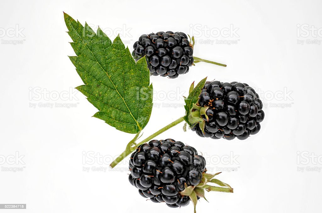 fresh blackberries with leaf on a white background stock photo