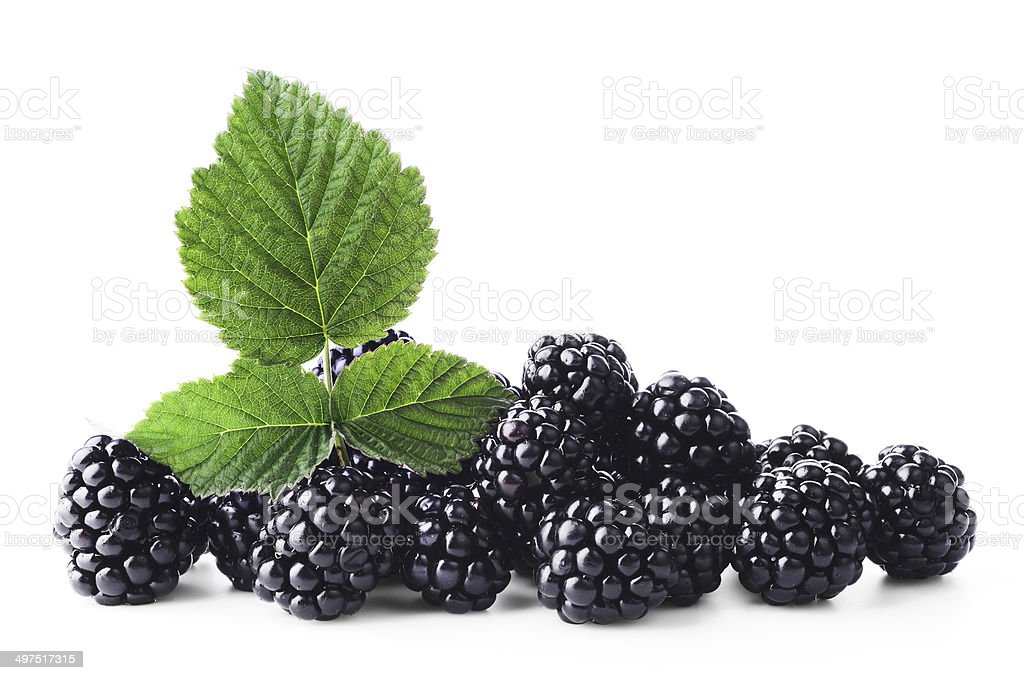 Fresh blackberry with green leaf on white background stock photo
