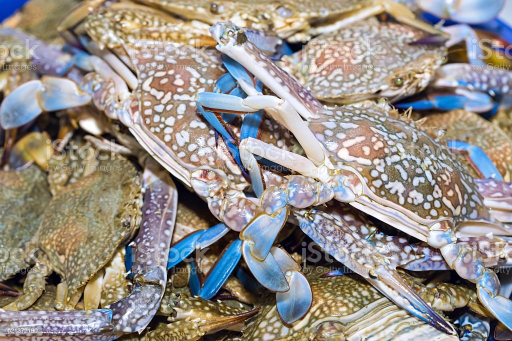 Fresh blue crabs on ice exposition at the seafood market stock photo