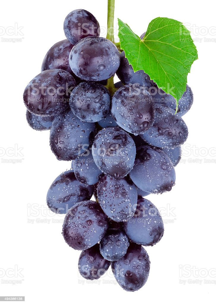 Fresh blue grapes hanging isolated on a white background stock photo