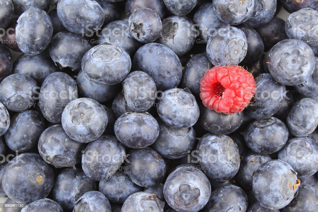 fresh blueberry fruits and a red raspberry closeup food background stock photo