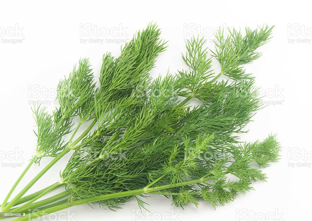 Fresh branches of green dill stock photo