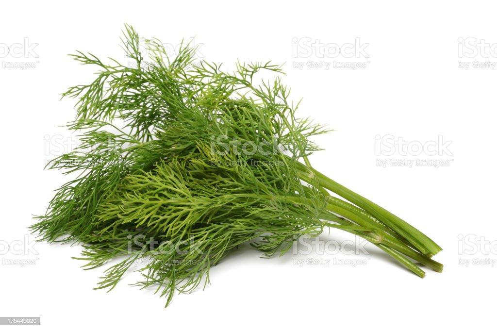 Fresh bunch of green dill herbs stock photo