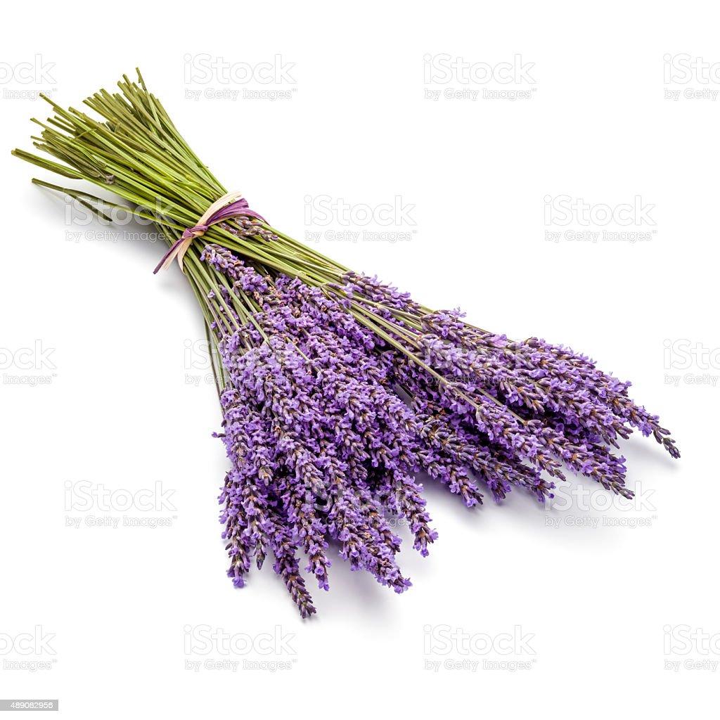 Fresh bunch of Lavender stock photo