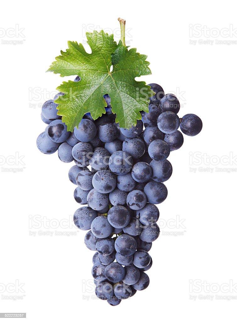 Fresh bunch of red wine stock photo