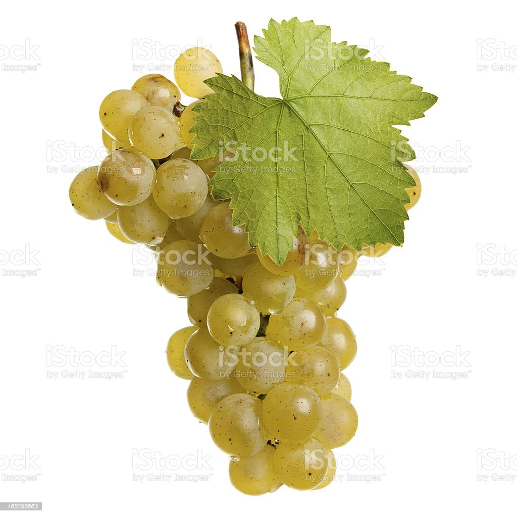 Fresh bunch of wine on a white background royalty-free stock photo