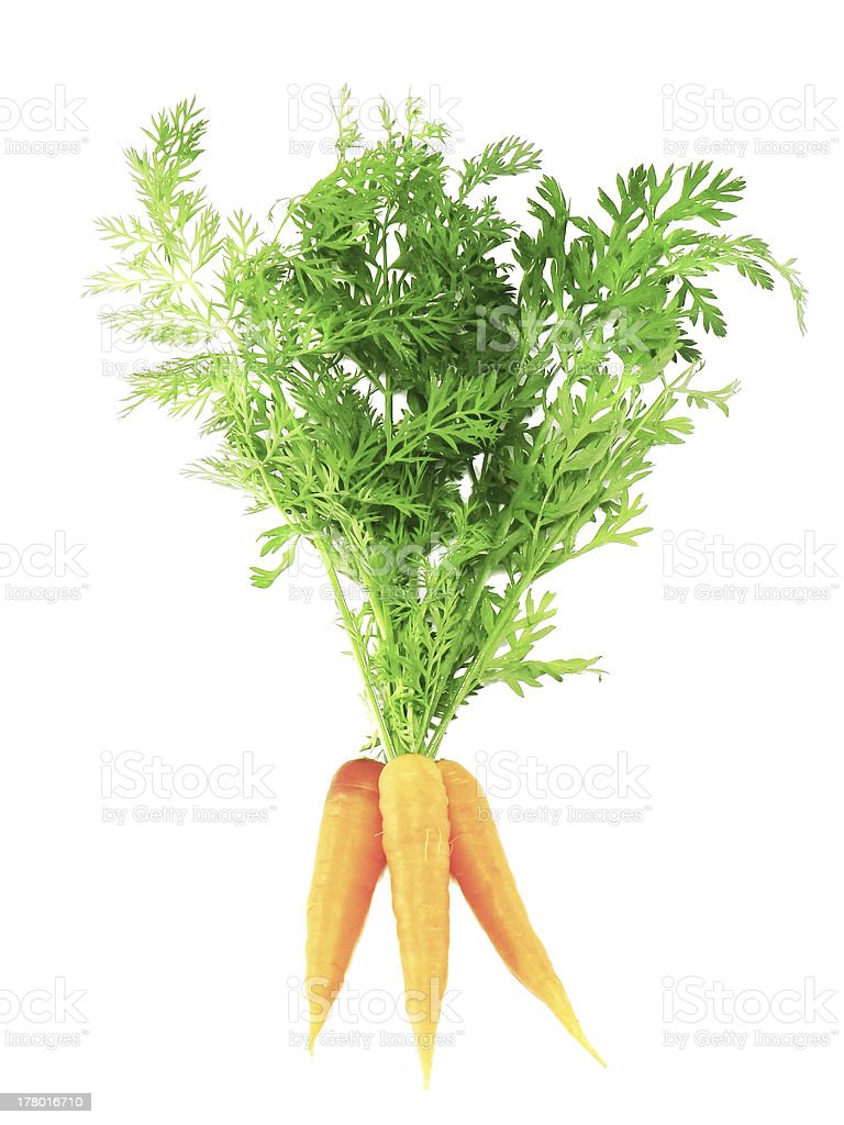 Fresh carrot with green branch . Isolated. royalty-free stock photo