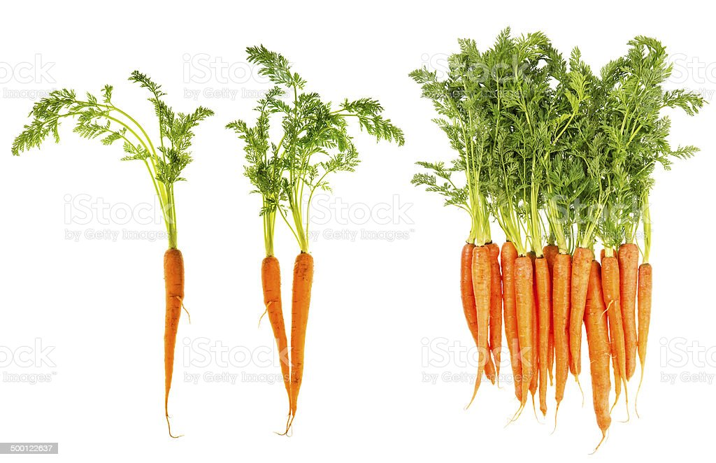 fresh carrots with green leaves isolated on white stock photo