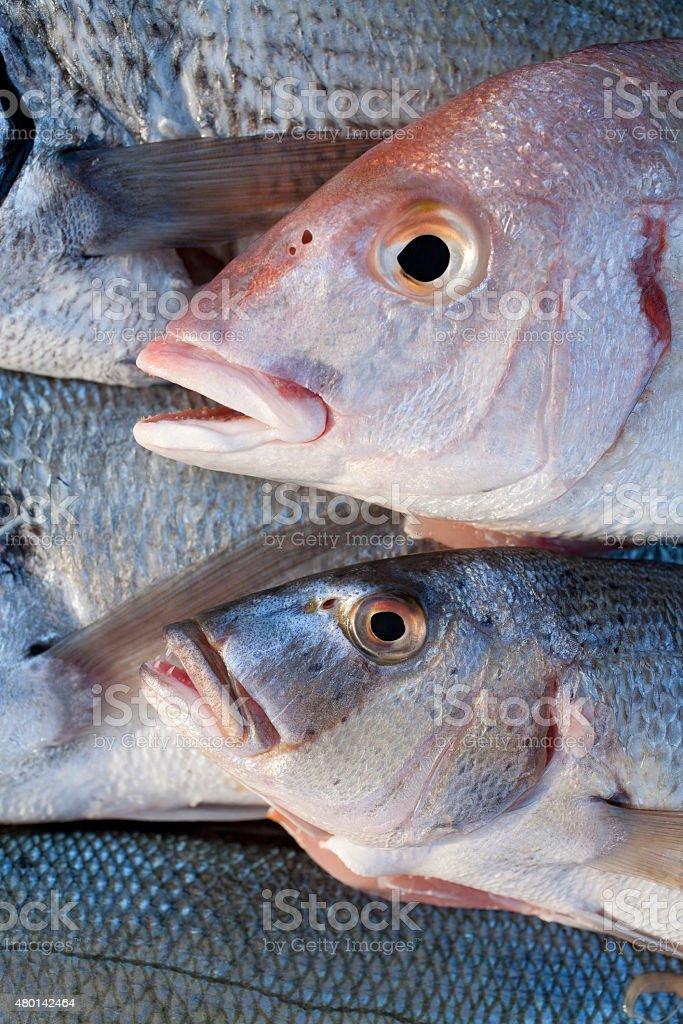 Fresh catch of fish stock photo